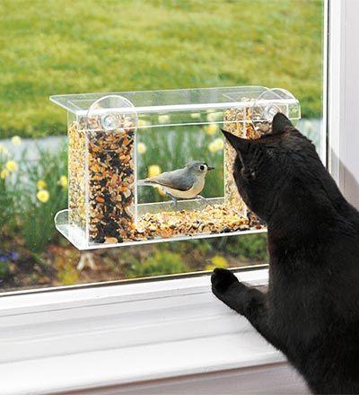 vogelhuisje kopen